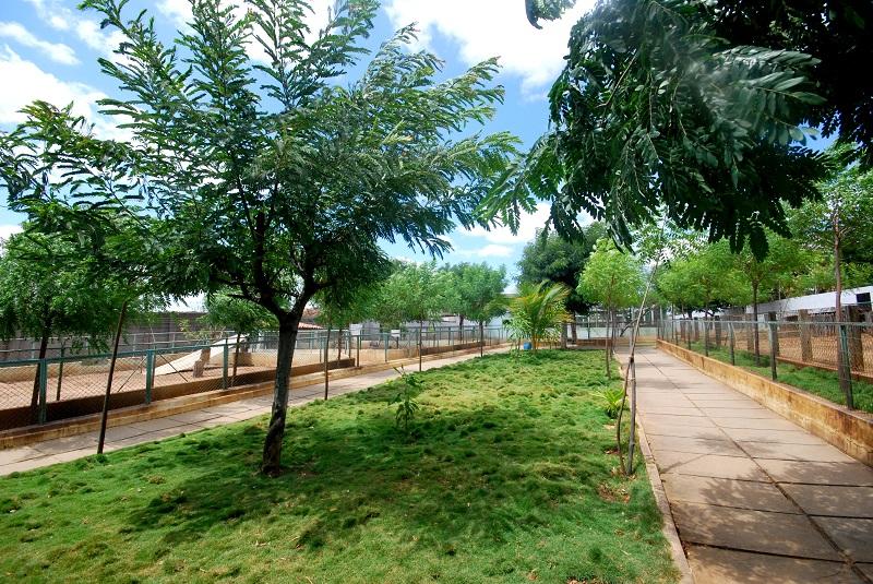 Área arborizada de acesso ao recinto dos felinos